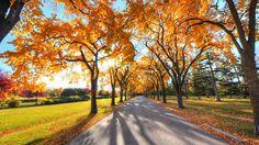 autumn alley park HD