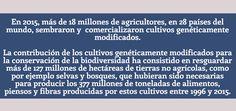 Resultado de imagen para cosechas geneticamente modificadas explicacion