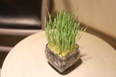 バンコクのRIVA SURYAホテルの部屋にあった植物。