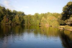 Sunny, spacious home on rural acreage with private 8-acre pond in South Carolina  House Sitter Needed  Southeast, Columbia   South Carolina United States  Aug 30,2015 For 32 days, beginning Aug 30 and ending Oct 2, 2015