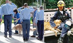 Bretagne, a 16-year-old golden retriever who was the last surviving search dog who helping to find survivors after the twin towers came crashing down on September 11, has died in Texas.