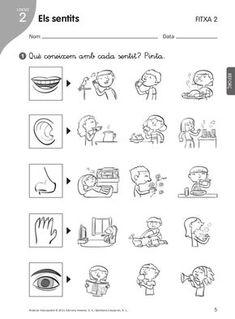 els sentits primero primaria - Cerca amb Google