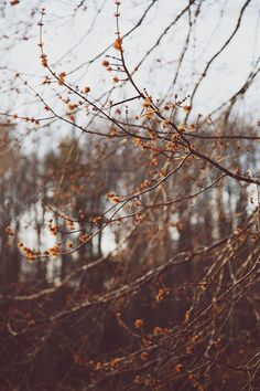 Autumn Day, Autumn Trees, Autumn Leaves, October Country, Nature Sauvage, Autumn Aesthetic, Seasons Of The Year, Fall Pictures, Autumn Inspiration