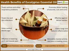 The health benefits of eucalyptus oil can be attributed to its anti-inflammatory, antispasmodic, decongestant, deodorant, antiseptic, antibacterial, stimulating, and other medicinal properties. Eucalyptus essential oil is colorless and has a distinct taste and odor. Though eucalyptus essential oil has most of the properties of a typical volatile oil, it is not very popular as an aromatherapy oil as it was little known before a few centuries. However, the numerous health benefits of…