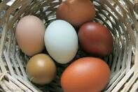 These are not your supermarket eggs!