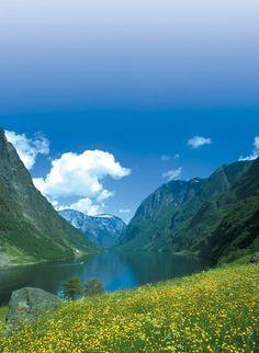 Norwegian Fjords #travel