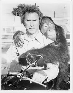 More monkeys... Clint Eastwood and Clyde in 'Every Which Way But Loose',  c. 1978. ☚