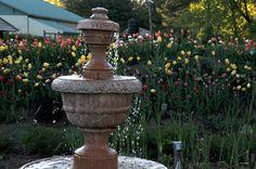 Fontaine dans la roseraie