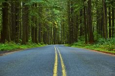 Begin in Olympia, the state capital, by taking WA-101 north. The stunning scenery begins almost immediately. The route will take you through the towns of Kamilche, and Sheldon with its ... Read More