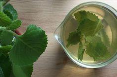 Čaj z rýmovníku Korn, Cabbage, Food And Drink, Vegetables, Drinks, Ethnic Recipes, Drinking, Beverages, Cabbages