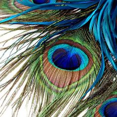 Online Get Cheap Peacock Feather Background -Aliexpress.com ...