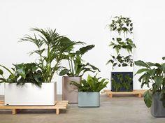 Tait-planters