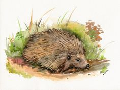 Hedgehog Original Watercolor painting Animal by TheRedBerry