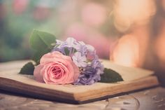 In pink and blue Book Flowers, Shabby Flowers, Flowers Nature, Beautiful Flowers, Facebook Cover Photos Flowers, Facebook Cover Images, Sunshine Pictures, Cute Photography, Love Rose