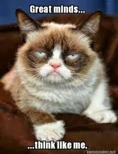 Funny Cat Remains Still Gif