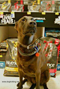 sasha in petsmart Raw Pet Food, Raw Food Diet, Dog Travel, Raw Food Recipes, Dog Lovers, Pets, Animals, Animales, Animaux