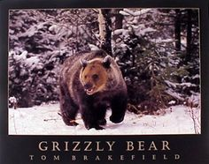 Grizzly Bear with His Teddy Bear Framed Print Picture Poster Cute Animal Art