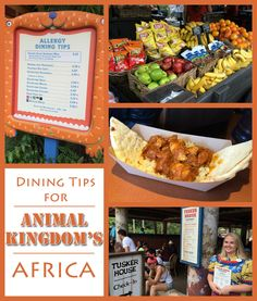 There is a lot to eat to Disney's Animal Kingdom and you definitely don't want to miss what Africa is offering. Here's what you need to know!
