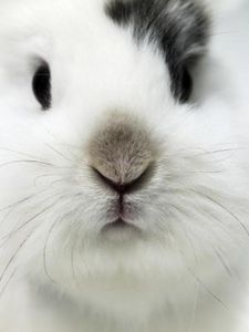 How to Prevent Rabbits From Eating the Landscape thumbnail