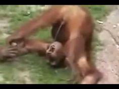 Une #compilations de vos #animaux préférés - YouTube #vidéos #zoomalia #animalerie http://www.youtube.com/watch?v=oGGR-F1XHm8