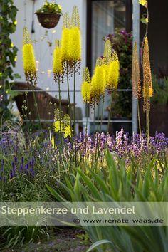 die 68 besten bilder von winterharte pflanzen gartenpflanzen g rtnern und balkongarten. Black Bedroom Furniture Sets. Home Design Ideas