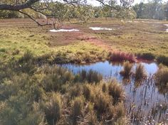 Saltmarsh and mangroves form a dynamic system influenced by hydrology and the variations in climate Habitats, Country Roads, Mountains, Nature, Travel, Naturaleza, Viajes, Trips, Nature Illustration
