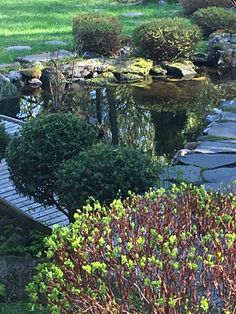 My japanese garden Funny Slogans, Small Island, Garden Bridge, Land Scape, Vegetable Garden, How To Look Pretty, Around The Worlds, Backyard, Japanese Gardens