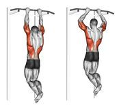 Exercising. Pull-ups on the brachialis. Pull-ups on the brachialis. Exercising for bodybuilding Target muscles are marked in red stock illustration Body Training, Weight Training Workouts, Gym Workout Tips, Workout Kettlebell, Workout Fitness, Cable Workout, Sport Fitness, Muscle Fitness, Fitness Tips