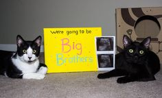 Our pregnancy announcement! With cats lol
