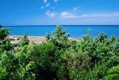 Marina di Bibbona, on the Tuscan coast, long white beach backed by pine trees