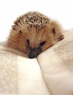Hedgehog Monument, Kiev: Address, Hedgehog Monument Reviews: 5/5