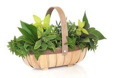 Herb leaf sprigs of rosemary, bay, oregano, golden marjoram,. White Beans, Green Beans, Guisado, Tomato Dishes, Fish Stew, Yogurt Sauce, Egg Dish, Ideas Geniales, Drying Herbs