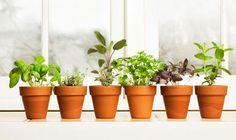 Veg on the ledge! Winter windowsill gardening