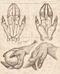 Lycanthrope Anatomy Top Image Row 2 Row 3 Row 4 Row Left, Right Row Left, Right Bottom Image Creature Drawings, Animal Drawings, Art Drawings, Creature Concept Art, Creature Design, Dragon Anatomy, Anatomy Drawing, Anatomy Study, Monster Drawing