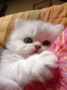 ღ♥  I am a cat person, through and through ! ( not me, my passion for......:)  )