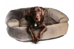 Orthopedic foam base provides a luxury nest for your pet! Visit SkyMall.com for your pet products and more!