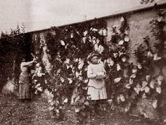 """L'ensachage (fruit bagging) / In Suzanne Freidberg's wonderful book, Fresh, which describes the efforts of the nineteenth-century fruit-growers of Montreuil to """"brand"""" their apples for the novelty-seeking Parisian luxury market."""