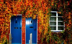 Hereford Doors #leshaines123 #Hereford Loved the symmetry of this shot and the vivid colours of the autumn leaves against the blue doors. Kept the window in to add balance to the composition. Taken in Hereford UK.