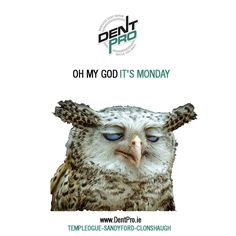 Its That day but we're here to take away the pain  #mondaymorning #motorinsurance #mororingireland #cars #DentProIE #Owls #Birds #Dublin #LoveDublin #Monday