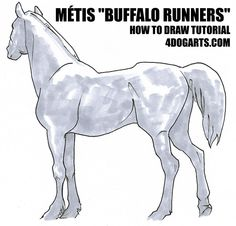 Here's a step-by-step tutorial on how to draw the Métis Buffalo Runner horse Horse Drawings, Buffalo, Moose Art, Horses, Dogs, Tutorials, Animals, Animales, Animaux