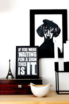 Interieurtip: Vereeuwig je hond - Famme - Famme.nl