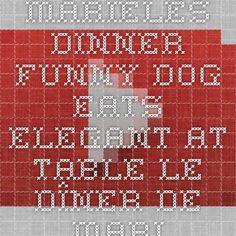 Marieles Dinner - Funny Dog eats elegant at table - Le dîner de Mariele - Chien drôle mange à table - YouTube