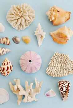 seashells on our mind
