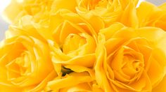yellow images - Google Search