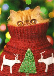 #funny, #cat, #dog, #Christmas, #Holiday, #cute, #animal, #humor  Swag: http://www.cafepress.com/tlconline