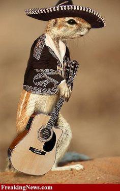 Meerkat Funny   Meerkat funny pictures