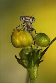 such a cute little buggie