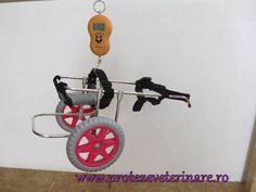 proteza veterinara Stationary, Gym Equipment, Bike, Bicycle, Bicycles, Workout Equipment