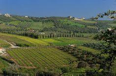 Local Vineyards, Crete.