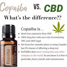 Why doesn't dōTERRA jump into the CBD craze? wellnesswednesday not cbd health wellness Copaiba Oil, Copaiba Essential Oil, Doterra Essential Oils, Young Living Essential Oils, Essential Oil Diffuser, Essential Oil Blends, Arthritis, Cedarwood Oil, Diffuser
